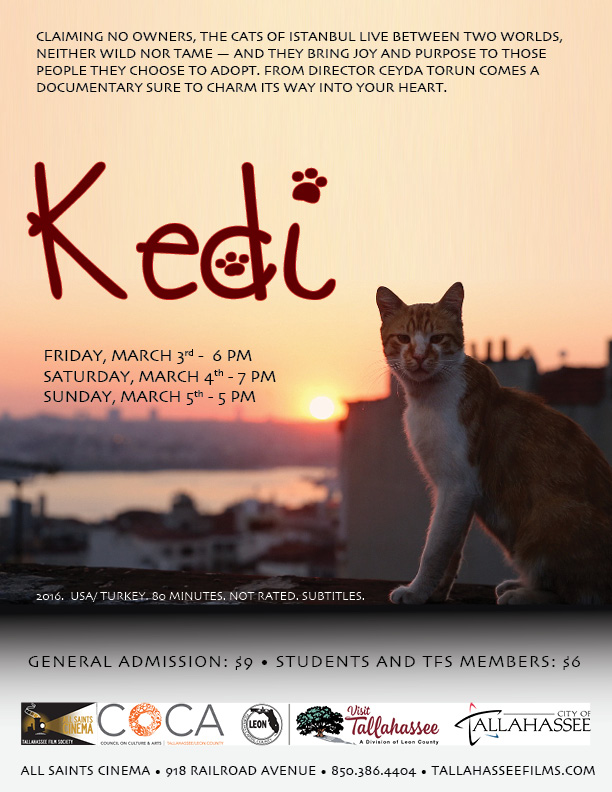 Kedi, the cats of Istanbul