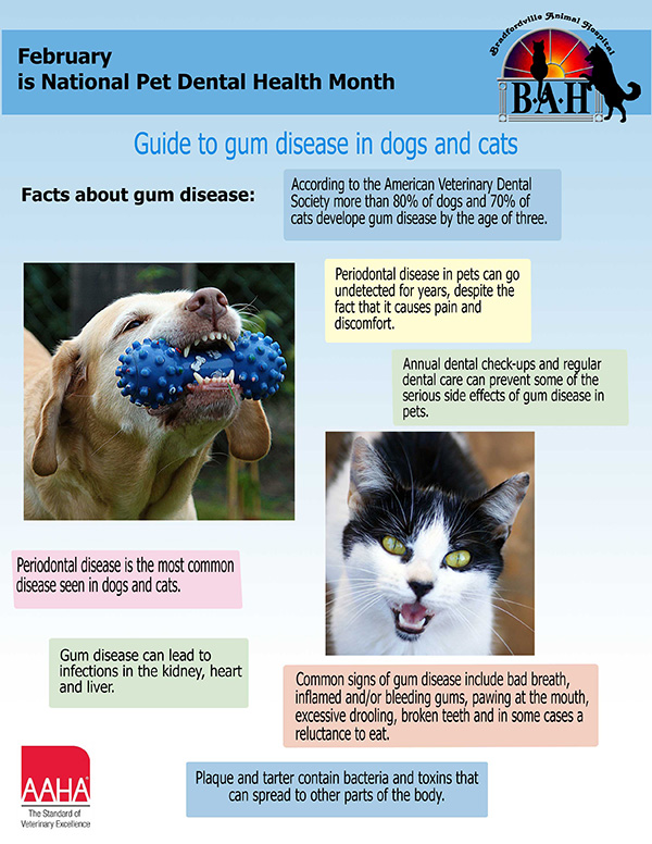 pet dental infographic