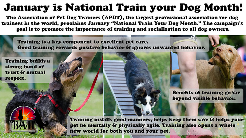 Pet training and working month