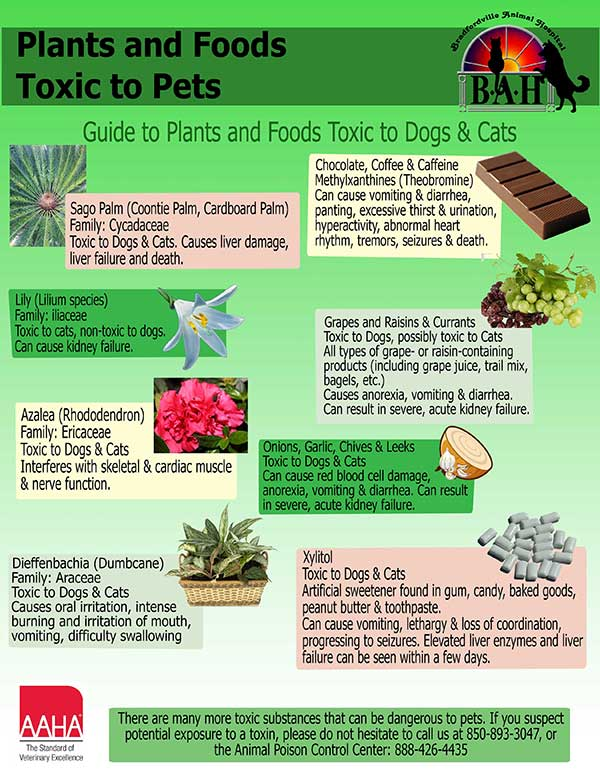 Toxic Foods and Plants