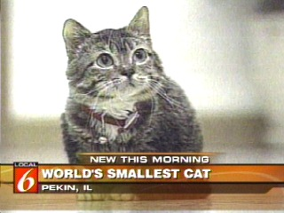 source wwwbah4petscom report the smallest cat in the world guinness